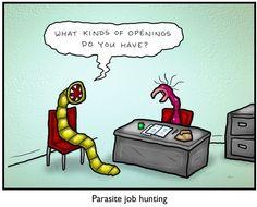parasite job opening